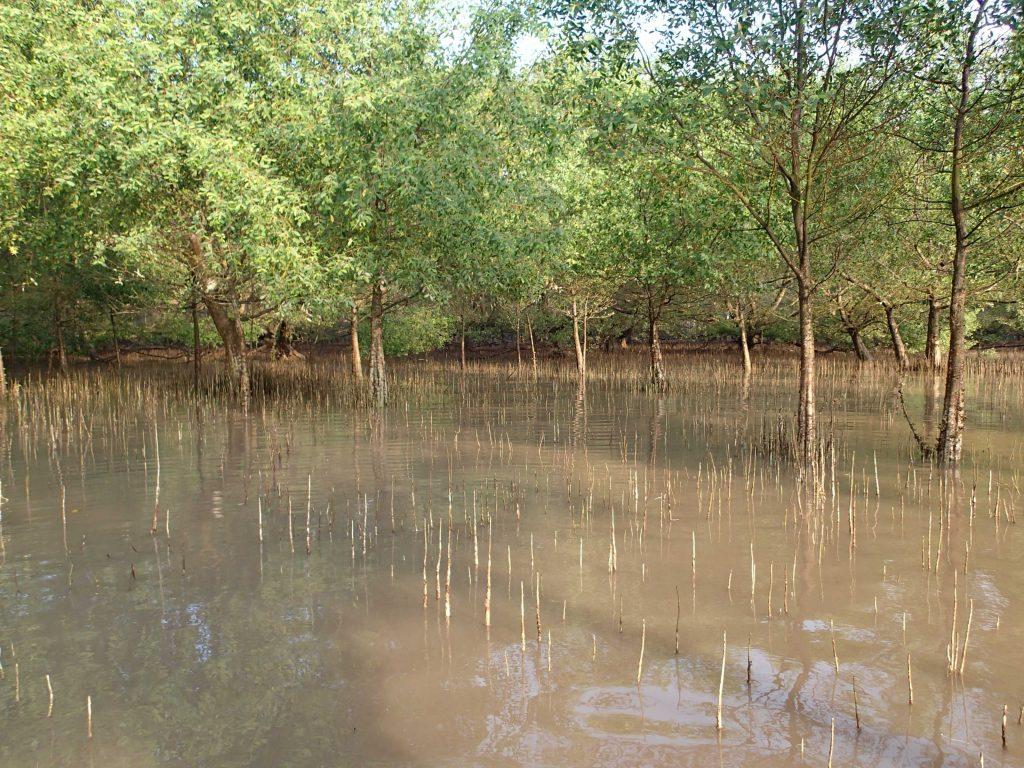 Mekong Delta mangrove forest